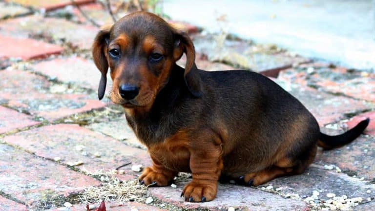 Image of: Miniature Dachshund Love Sausage Dogs You Might Want To Go To This All Things Dog Love Sausage Dogs You Might Want To Go To This All Things Dog